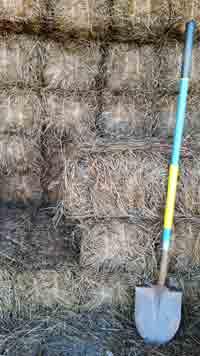Long Leaf Pine Needle Bales
